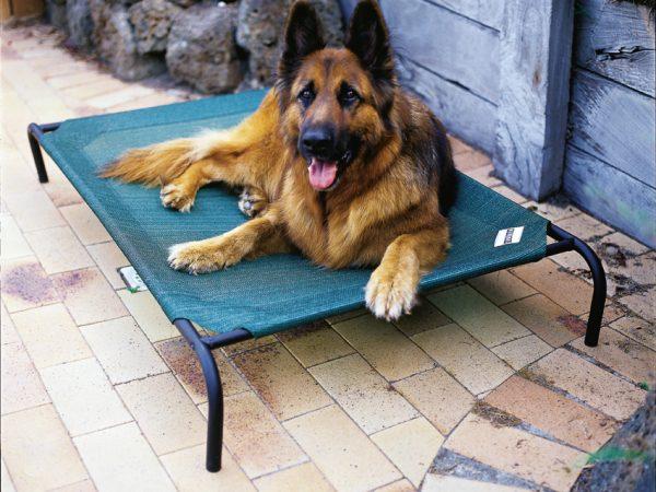 1 Pet Bed Large